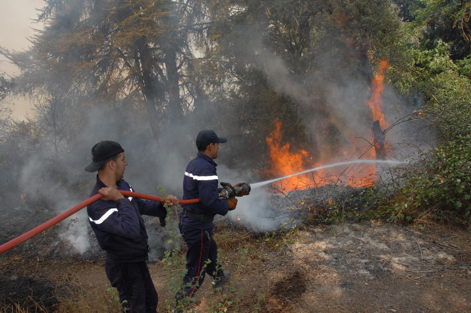 Les feux de forêts... la main de l'homme – Le Jeune Indépendant